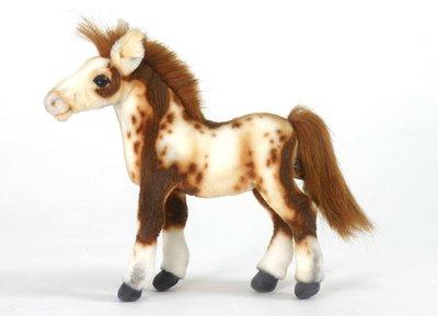 Hansa Pinto veulen ( paard )