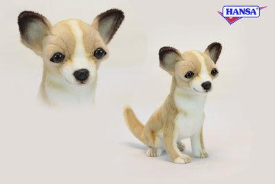Hansa Chihuahua zittend