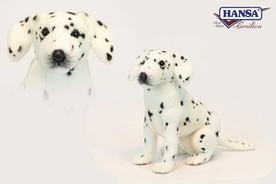 Hansa Dalmatier pup